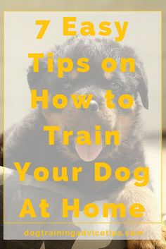 7 Easy Tips on How to Train Your Dog At Home | Dog Training Tips | Dog Obedience Training | Dog Training Ideas | http://www.dogtrainingadvicetips.com/7-easy-tips-train-dog-home #puppytrainingeasy