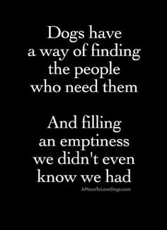 Dogs have a way of finding the people who need them.  And filling an emptiness we didn't even know we had.