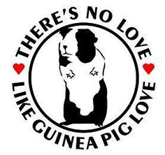 No love like Guinea Pig Love! GP love is the best because it's unconditional. Guinea Pig Quotes, Pig Pics, Dumb Animals, Pig Crafts, Cute Guinea Pigs, Funny Pigs, Cute Piggies, Cute Backgrounds, Animals Of The World