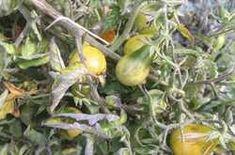 Újra tombol a műanyagflakon-láz: istenítik az ötletet a háziasszonyok! - Ripost Fruit