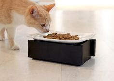 I love this pet dish by Trendy Pet!  Modern Cat thank you for all your great finds!