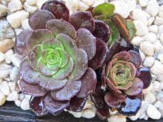 Add succulents to your summer garden for their easy care & beauty. www.mysoulfulhome.com