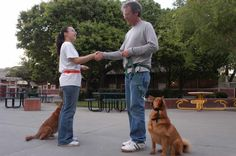 Dog Training Classes Can and Should Be More than Sit, Stay, Stand – Dr. Sophia Yin
