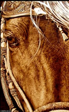 Even horses love jewelry. All The Pretty Horses, Beautiful Horses, Animals Beautiful, Horses And Dogs, Wild Horses, All About Horses, Equine Art, Horse Pictures, Horse Photography