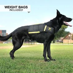 Muscle Building And Strength Exercises For Dogs Dog Training