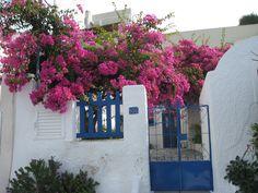 Santorini, Greece.  Blue & white everywhere