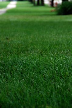 Summer Lawn Care - Warm temperatures, drought and summer rain storms take their toll on our landscapes. Keep your lawn healthy and looking its best despite the summer weather...