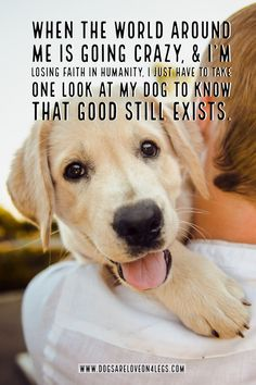 Dog Quote - When the world around me is going crazy... Dog | Dog Quotes | Inspirational Quotes | Funny Quotes | Life Quotes