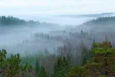 Foggy forest in Nuuksio National Park, Finland.