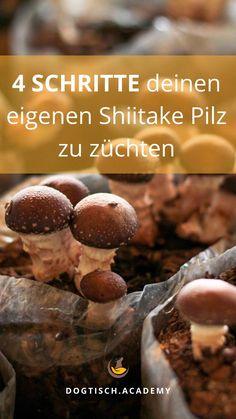 Ich habe es für dich selbst ausprobiert. Hier bekommst du 4 Schritte gezeigt, wie du deinen eigenen Shiitake Pilz züchtest. Tricks, Breakfast, Blog, Growing Mushrooms, Natural Home Remedies, Morning Coffee, Blogging