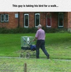 15 People Who Look Quite Ridiculous Walking Pets Other Than Dogs - World's largest collection of cat memes and other animals Parrot Toys, Parrot Bird, Parrot Pet, Animals And Pets, Cute Animals, Funny Animals, Very Funny Memes, Funniest Memes, African Grey Parrot