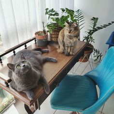 Irene, Animals, Home, Chair, Cats, Animais, Animales, Animaux, House