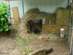straw shelter for bunny...