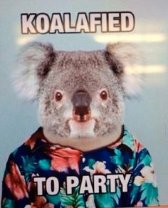 #koalafied #partyanimal #official #lmao