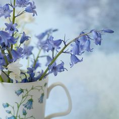 Bluebells: by Georgianna Lane (via french knot)