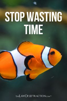 Here are 20 things you need to stop wasting your time on, to stop wasting time and start making the absolute most of your life. Stop Wasting Time, Stop Worrying, Positive Thinker, Positive Attitude, Relationship Bases, New Relationships, Holding Grudges, Head In The Sand, Live Your Truth