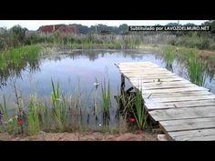 Lo que construyó esta familia en su jardín cambiará tu forma de ver las piscinas - Lógica Ecológica