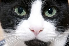 How to Clear a Cat's Stuffy Nose