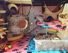Are you planning to decorate your rat cage? If yes, then we have curated some of the best rat cage ideas that you can use as an inspiration for your cage. Pet Rat Cages, Ferret Cage, Ferret Toys, Funny Rats, Cute Rats, Animal Room, Rata Dumbo, Rat Cage Accessories, Rat Care