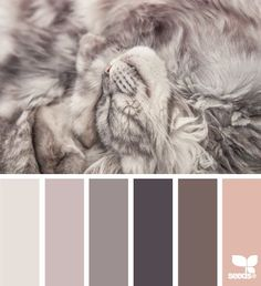 content tones (design seeds)