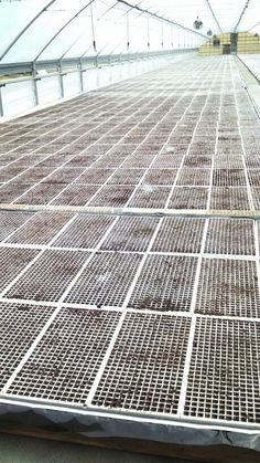Tobacco greenhouse just seeded