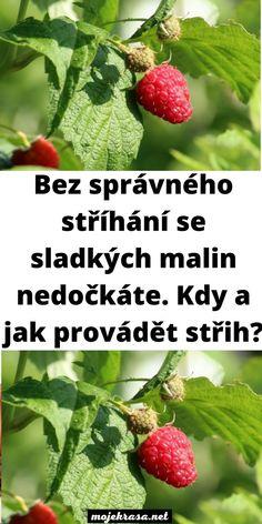 Harvest, Strawberry, Gardening, Fruit, Halloween, Diy, Syrup, Bricolage, Lawn And Garden