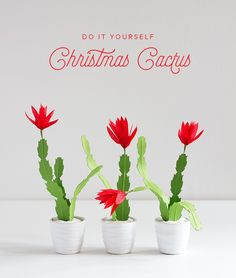 No matter the time of year you have to have a cactus! Check out the blog to make a paper Christmas cactus!