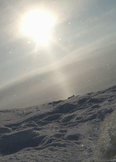 Polar bear passing through