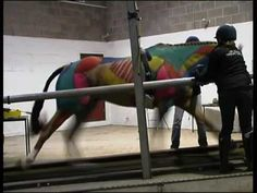 really cool video demonstrating bone movement and muscle movement #horse #videos #equine http://globalhorsecents.com