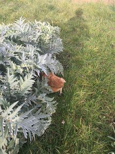 Gina hiding in the artichokes.