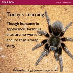 """Want more facts? Check out """"Sorry, Wrong Answer,"""" from Penguin #alwayslearning owl.li/plj69"""