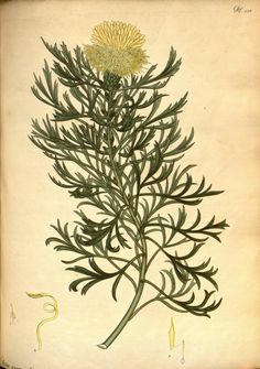 Henry Andrews - The botanist's repository, for new and rare plants : - Biodiversity Heritage Library