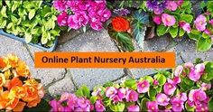 We can easily make our surroundings green even in our office as well as at our home. Gardener's Treasures has variety of online plants to choose from. Choose as per your desire. There are varieties of succulents, aloe, begonias, indoor plants that can relieve you from depression, stress, boredom etc. Get your favorite plants online in Australia.