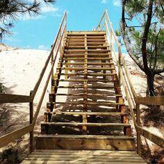 Route du paradis épisode 2... #mimizan  #mimizanplage  #landes  #chemindubonheur