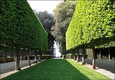 'Hedge on Stilts' at Hidcote Manor.  This could be achieved using boxhead pleached hornbeams.