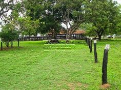 Saudosíssima ex fazenda em Gurupi - TO. Fundo da casa do irmão com vista para o curral.