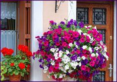 En güzel dekorasyon paylaşımları için Kadinika.com #kadinika #dekorasyon #decoration #woman #women petunias