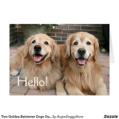 165 best golden retriever greeting cards postcards images on two golden retriever dogs outside thinking of you card m4hsunfo