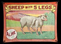 "vintage sideshow art.  Love the ""alive"" tag"