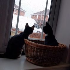"""Kitty Photo From @jupiter_and_pluto: """"Jupiter and Pluto are 4 months old and settling into l..."""
