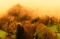 Foggy forest on Swiss Alps - Beautiful light and colours of foggy forest on Swiss Alps.