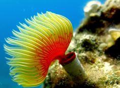 Tubeworm #underwater #tubeworm #nature #animals