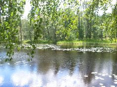 kesää Mäntyharjulla summer in Mäntyharju Finland, Natural Light, River, World, Nature, Summer, Outdoor, Outdoors, Naturaleza
