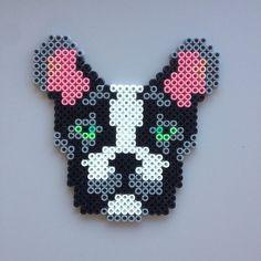 Dog hama perler by michelebayolsen: