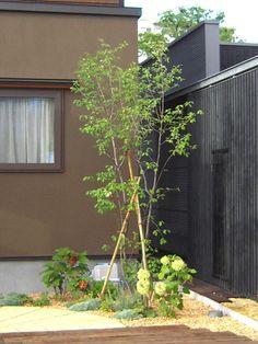 ジューンベリー Garden Design, House Design, Garden Trees, Green Flowers, Exterior, Outdoor Structures, Nature, Home Decor, Garden