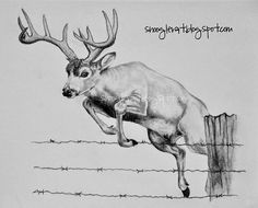 Hunting Drawings, Deer Sketch, Wildlife Prints, Animal Drawings, Wood Burning Art, Art Drawings, Bunny Drawing, Drawings, Deer Drawing