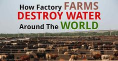 Large-scale factory farms not only deplete aquifers of valuable drinking water, they also pollute what little fresh water remains.