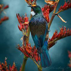 Tui Tea Time -lg by Julian Hindson - prints Tropical Birds, Colorful Birds, Pretty Birds, Beautiful Birds, Tui Bird, Fish Artwork, New Zealand Art, Nz Art, Maori Art