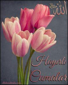 Dualarda Buluşalım - Dilek Mektubu Good Morning, Islam, Plants, Pretty Backgrounds, Rage, Friday, Quotation, Buen Dia, Bonjour