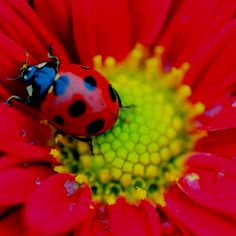 Lucky Seven Spot Lady bug...Ladybugs have been coming in the house with Brian lately...